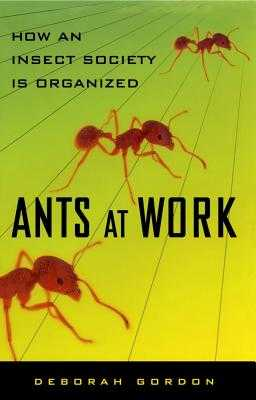 Ants at Work: How an Insect Society Is Organized - Gordon, Deborah, Esq