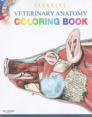 Saunders Veterinary Anatomy Coloring Book - Singh, Baljit, and Saunders