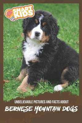 Unbelievable Pictures and Facts About Bernese Mountain Dogs - Greenwood, Olivia